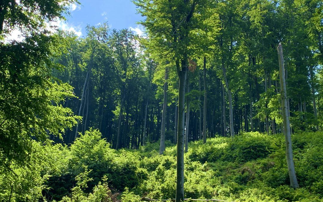 Certifikácia lesov v Elesko Forest s.r.o.